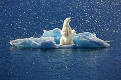 polar-bear-2199534_640.jpg