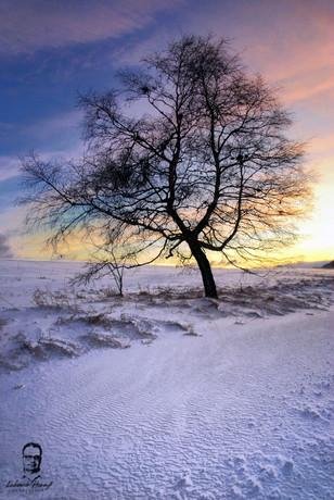 Strom - Strednica - Belianské Tatry
