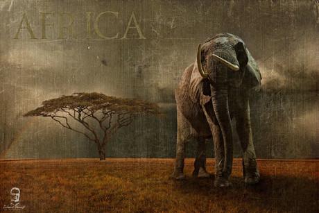 Afrika 2016