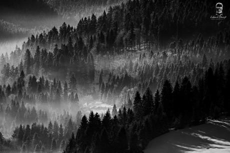 Lesy nad Veľkým Lipníkom