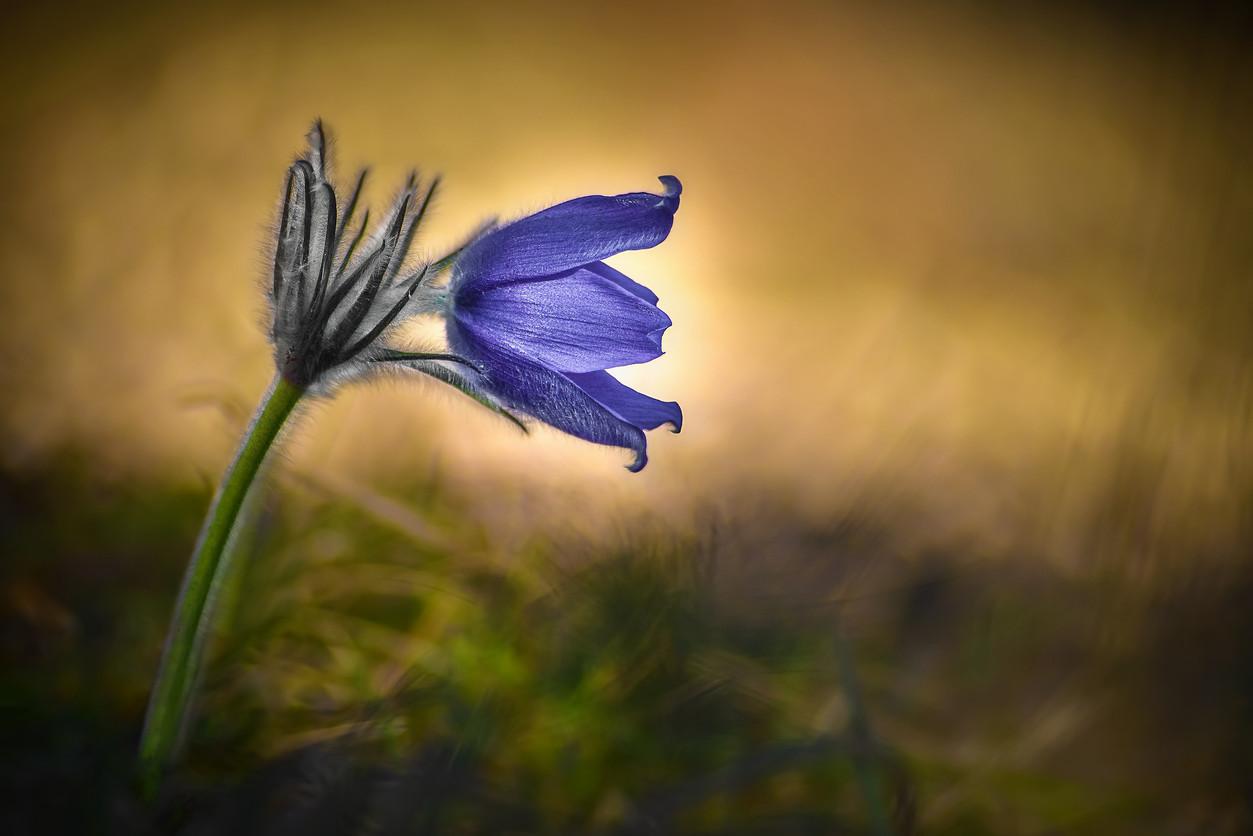 V krajine kvetov