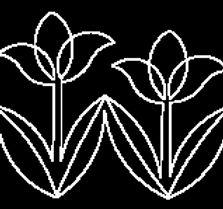 Tulips in a Row.jpg
