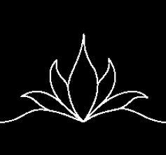 Tulips Triangle.jpg