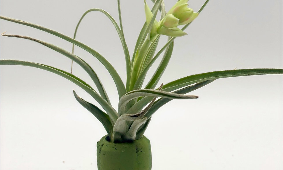 Flowering Magnet Cork