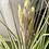 Thumbnail: XL Fresh Blooming air plant & Basket