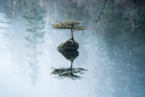 Fairy Tree Lake