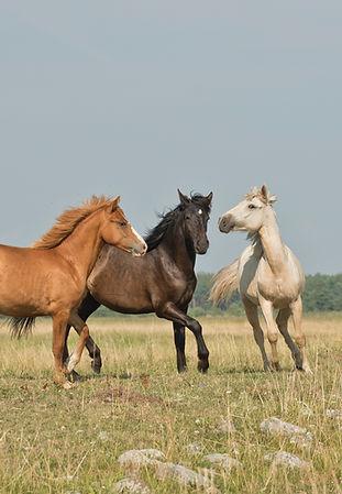 hästar_på_äng.jpg