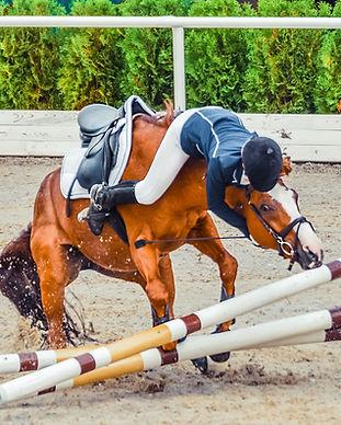 häst_vägrar_vimedhäst.jpg
