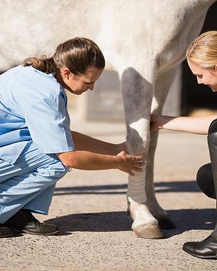 veterinär_vimedhäst.jpg