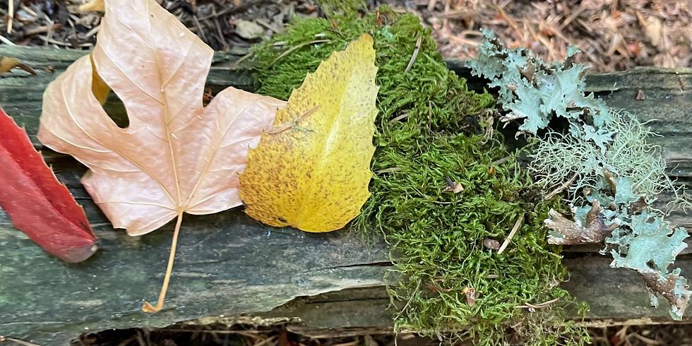 Sounds of Autumn Equinox
