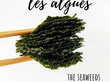 Pourquoi consommer des algues ? (FR/EN)