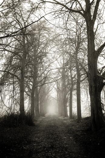 Tilburg - a misty road
