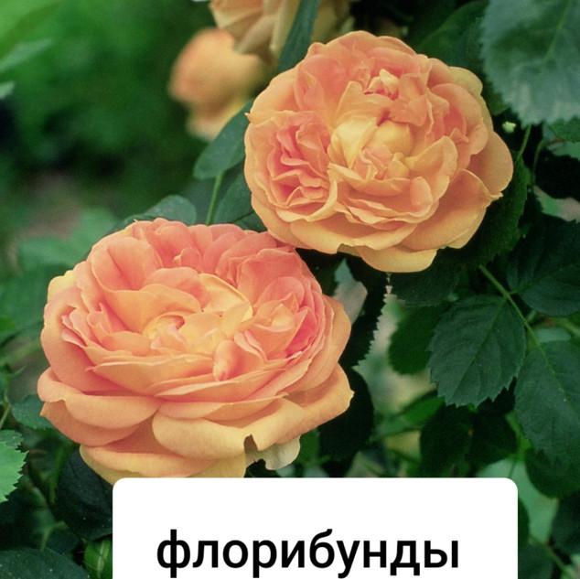 bQnu30mQ498.jpg