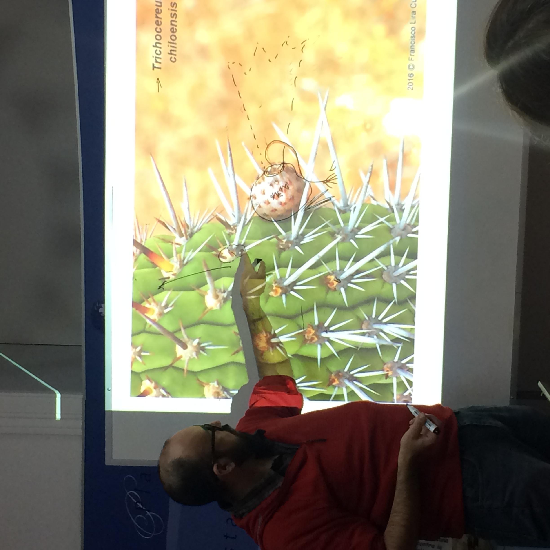Taller ilustración de cactáceas