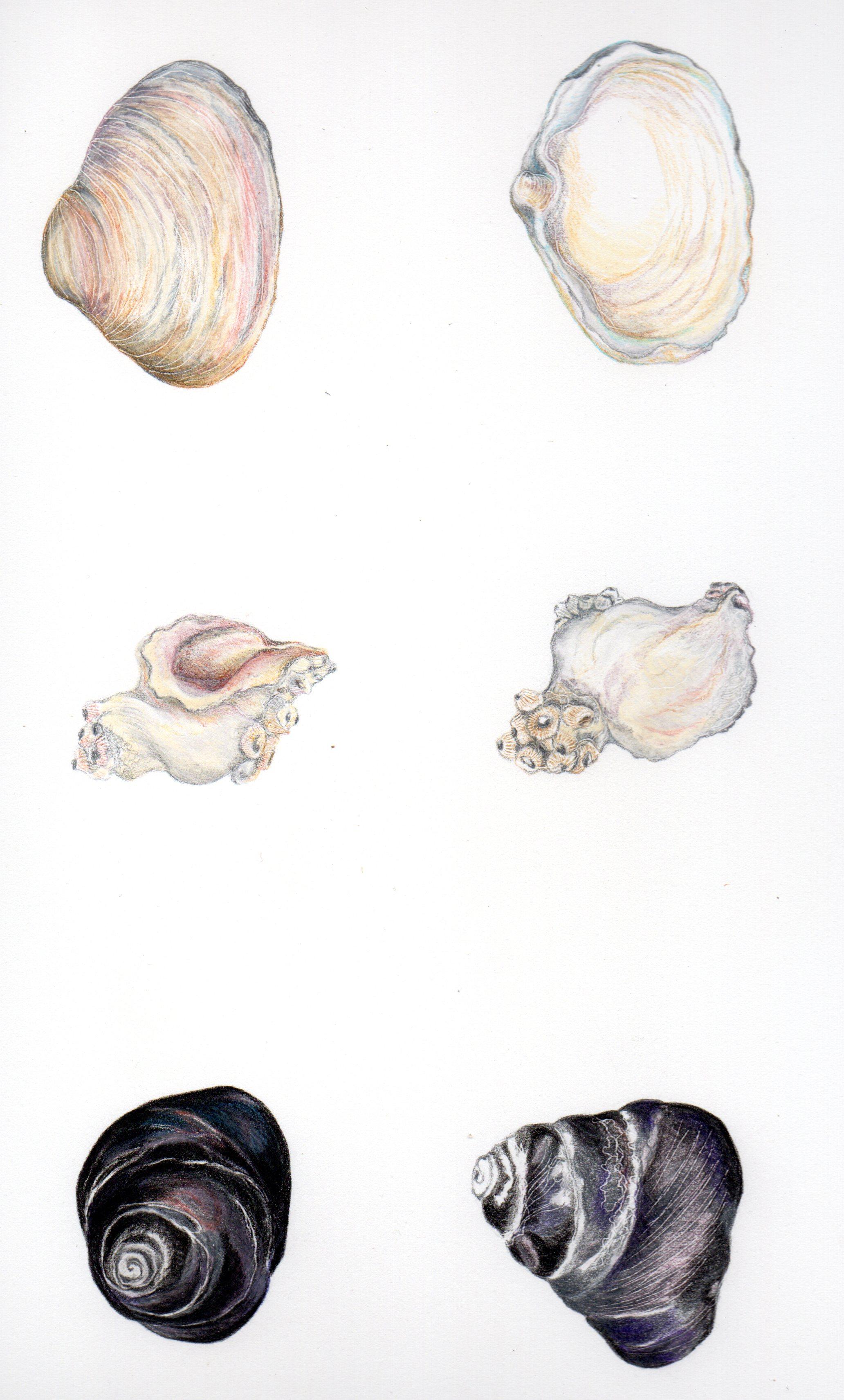 caracoles-Magdalena_Pérez_de_Arce