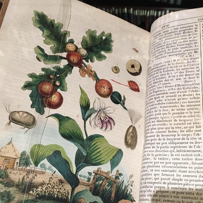 Selección curatorial de Libros de la Biblioteca Patrimonial Recolecta Domínica para la exposición CI