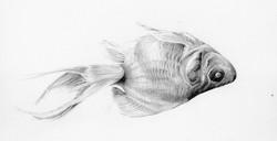 Patricia Domínguez - Goldfish