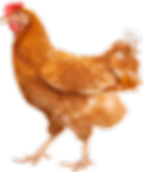 img-element-chicken.png