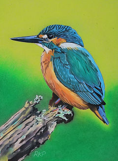 Kingfisher - RKP.jpg