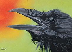 Carrion Crow - RKP.jpg