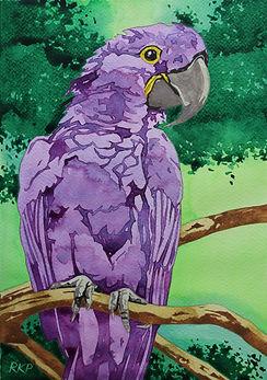 Purple Parrot.jpg
