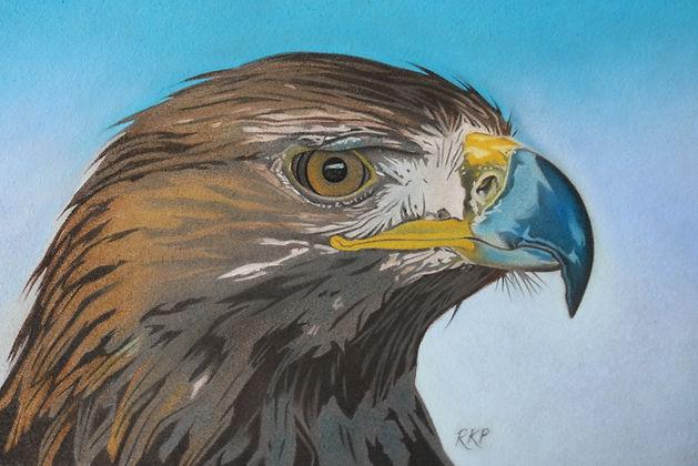 Golden Eagle - RKP.jpg