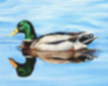 Mallard Duck Oil