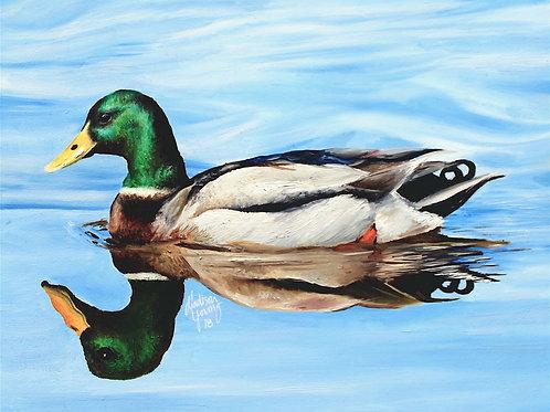 Mallard Duck Numbered Print