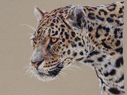 Jaguar Numbered Print
