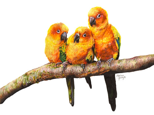Sun Conures Numbered Print