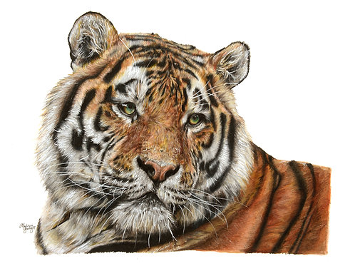 Tiger Numbered Print
