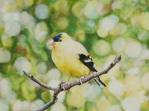 Gold Finch Numbered print