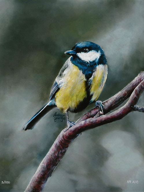 Blue Tit Numbered Print