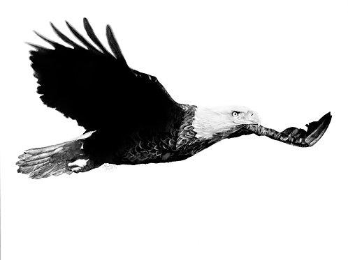 Soaring Eagle Numbered Print