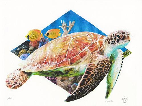 Sea Turtle #2 numbered print