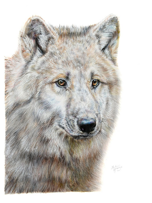 Wolf Numbered Print