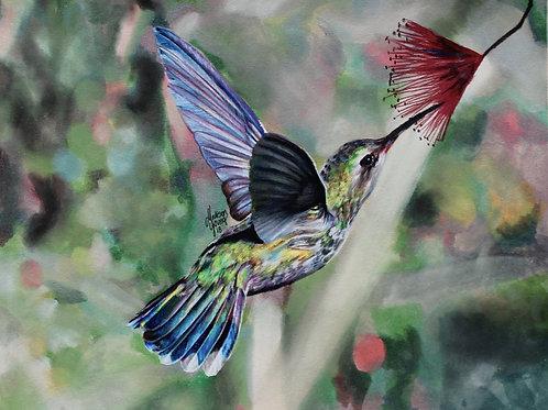 Hummingbird Numbered Print