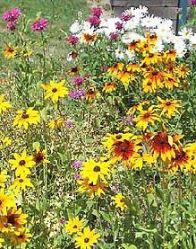 sharpsbros_wildflowerseed.jpg