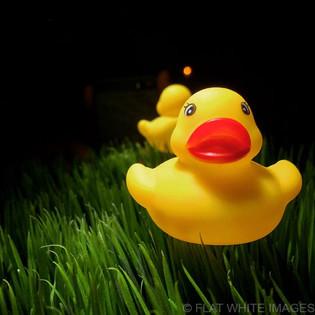 Grass Fed Duck.