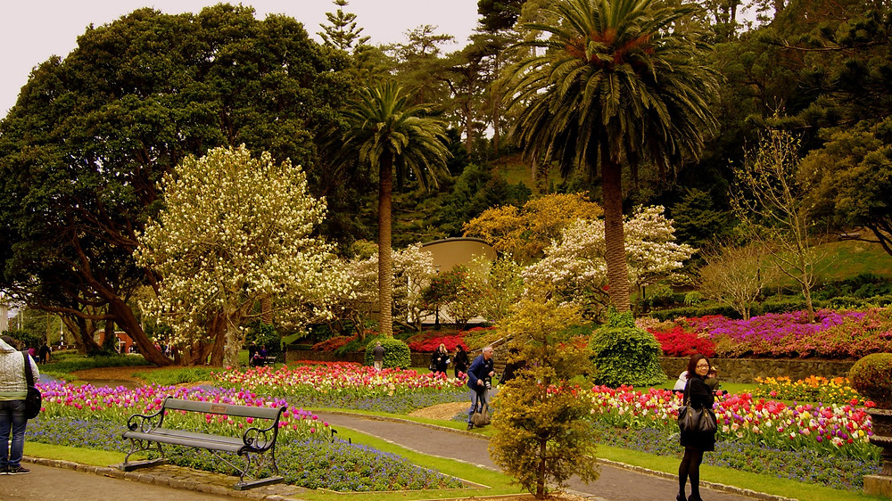 Wellington Park NZ Springtime