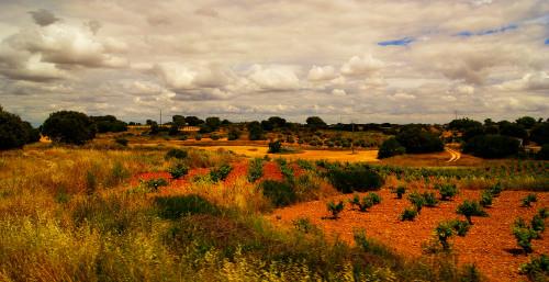 Espana 2015 field by Dan Izvernariu