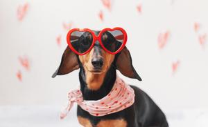 Cliché - Mascotas con gafas