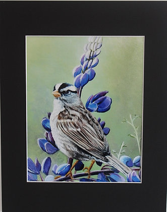 SPARROW ON LUPINS