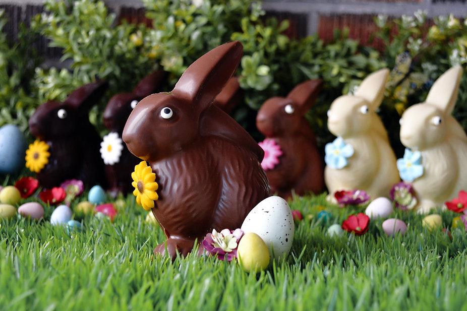 other bunny covrrt.jpg