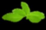 stevia-leaf-png-.png