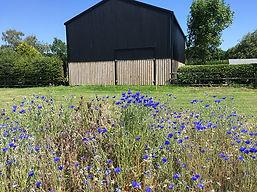 Dutch Barn summer 2020.jpg