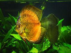 Fische0020.jpg