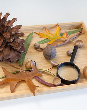 Mitcham-Montessori-9022.jpg