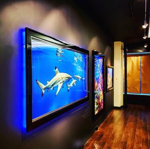 Custom Built LED Frame Presented by Global Glow Lighting Design