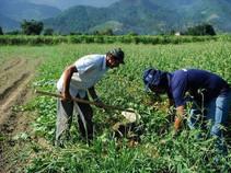 Nova modalidade de crédito será destinada aos produtos rurais.
